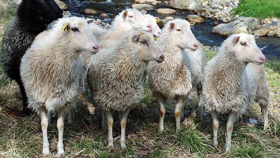 Bild för 'Naturbruksprogrammet Lantbruk'