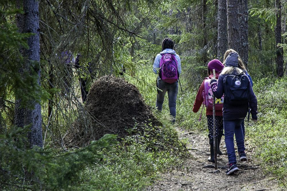 Bild för 'Naturskolan i Umeå'